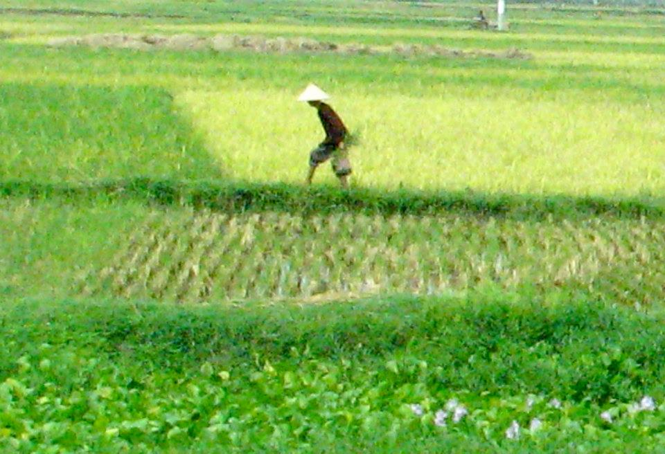 Farmer in green field.jpg
