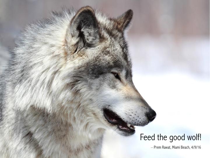 19 Wolf.jpg
