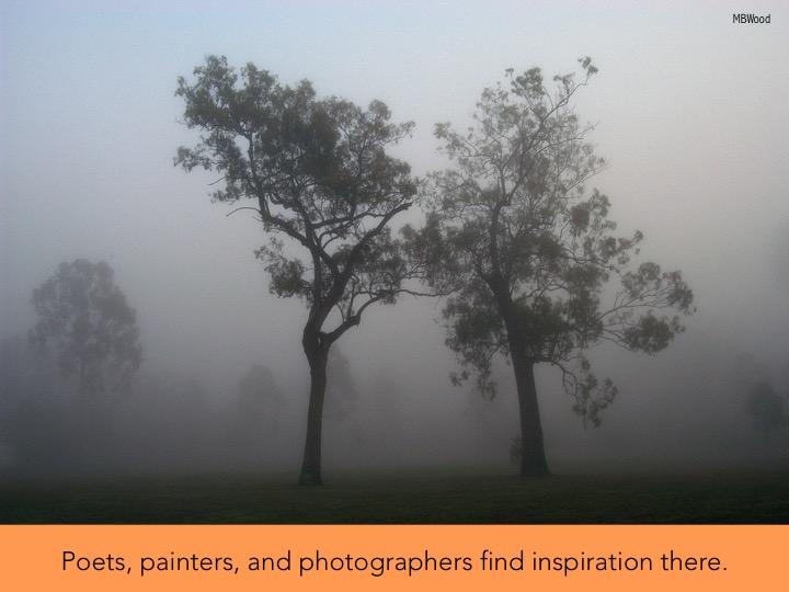 3 fog.jpg