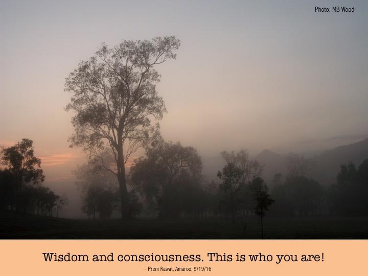 8 wisdom and conscious.jpg