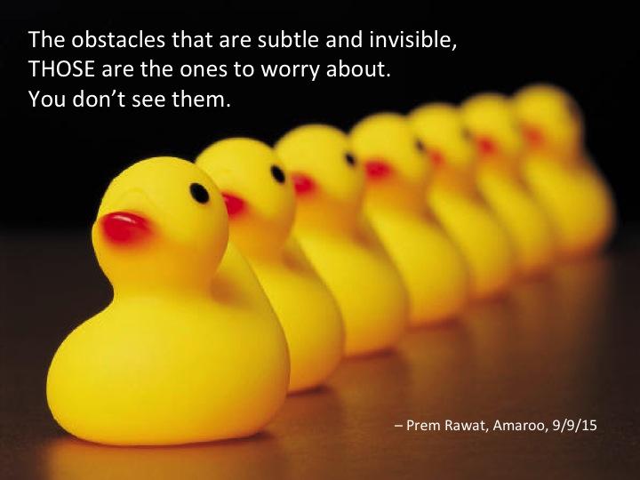 Ducks 5.jpg