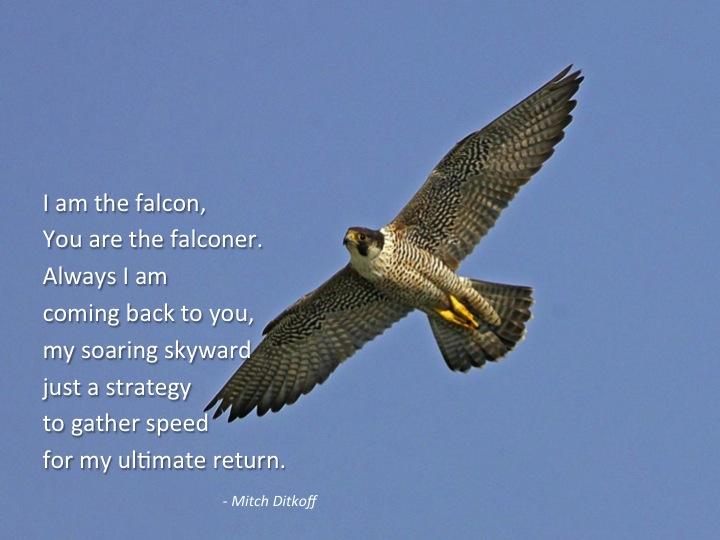 Falcon Quotes. QuotesGram