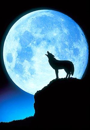 Wolf howling full moon.jpg