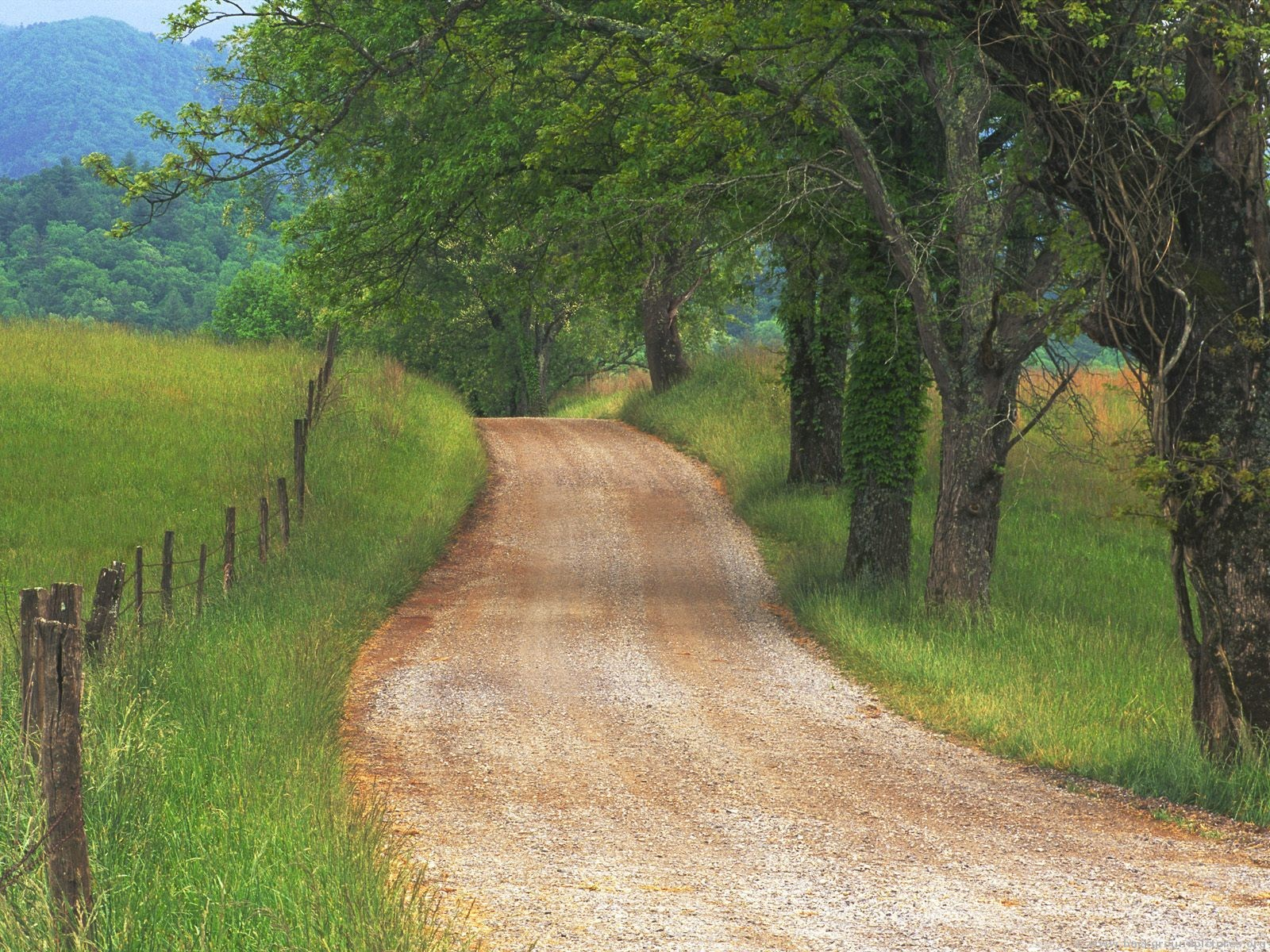 country_road_through_cades_cove_great_smoky_mountains_tennessee.jpg