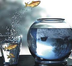 goldfishleap.jpg