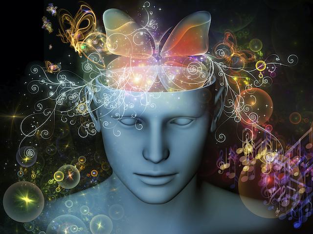 Butterfly brain44.jpg