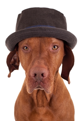 Dog with Hat.jpg