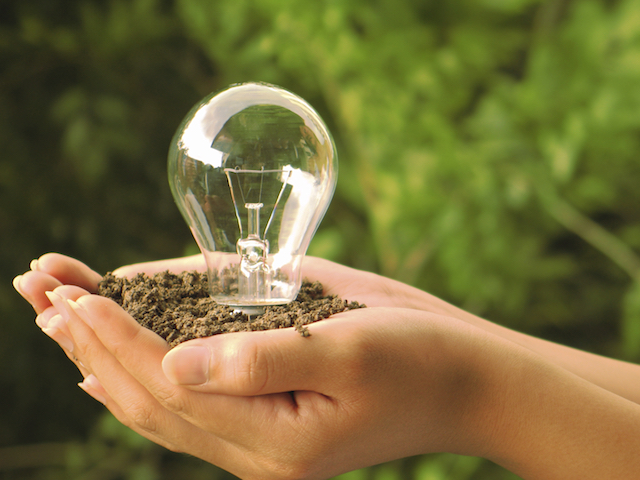 Garden lightbulb.jpg
