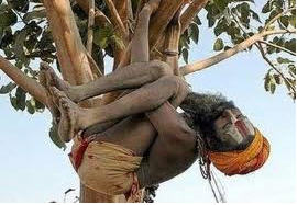 Indian man sleeping in a tree.jpg
