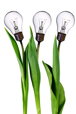 Lightbulb plants.jpg