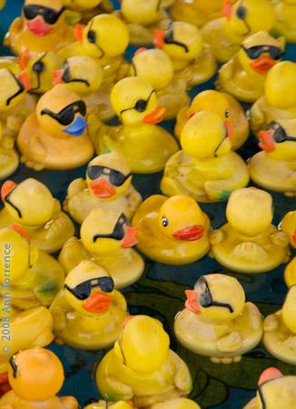 ducks_AT00463.jpg