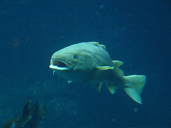 openmouthfish.jpg